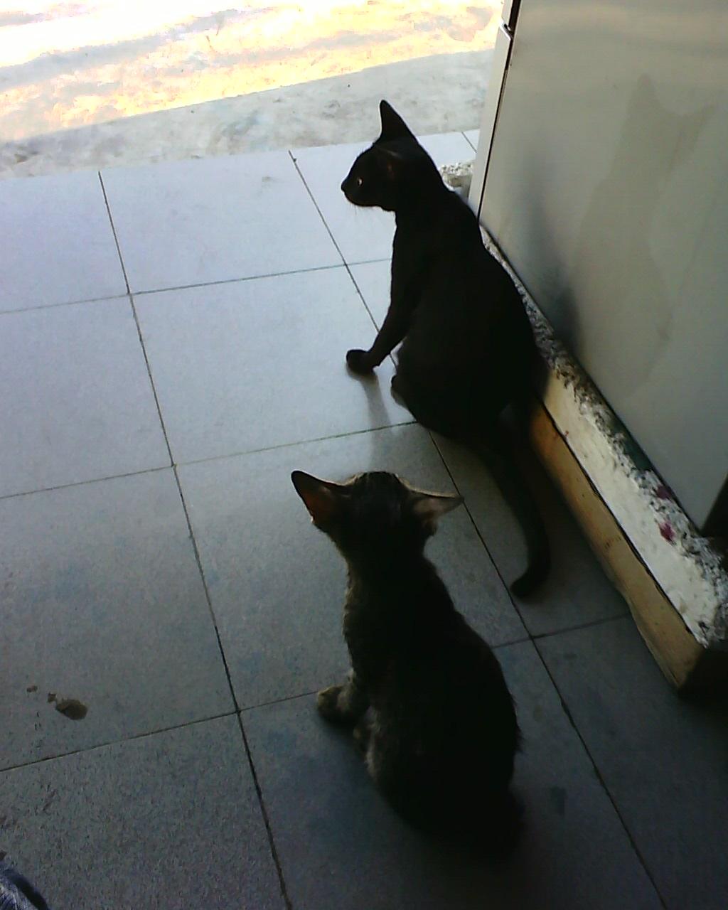 kucing remaja masih nete langit fachrie lantera
