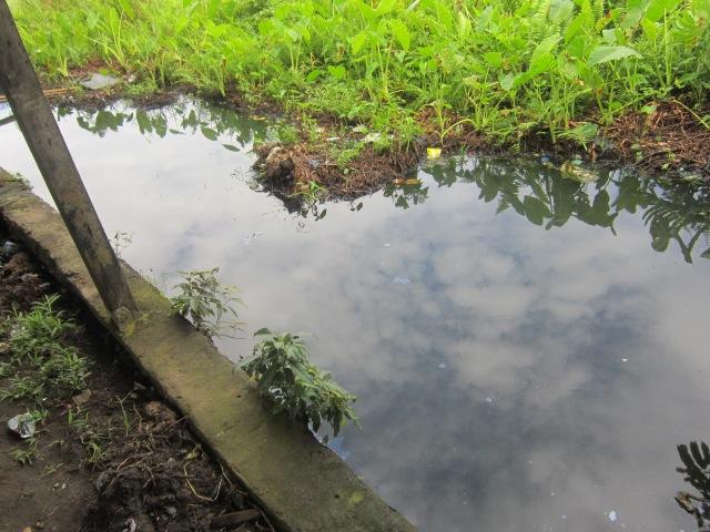Kolam buatan Wandiz dengan ikan nilanya yang lucu